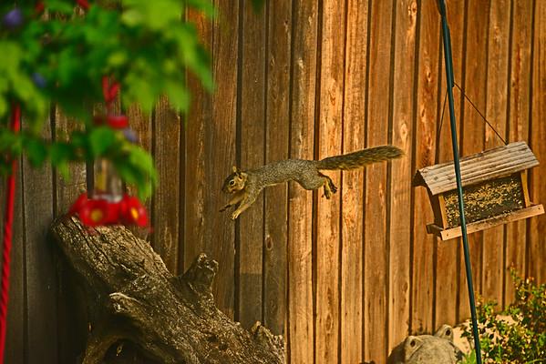 Mill  Creek Birds and a Back-Yard Squirrel, 9-4-15