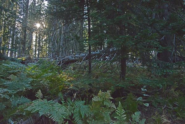 "Umatilla Rim Trail, with ""Woods Deep and Dark"",  9-8/9-15"